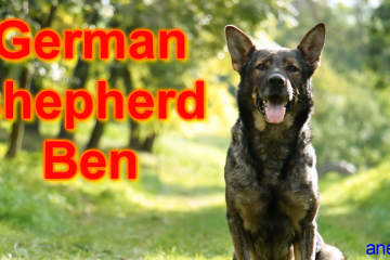 DOG TRICKS BY GERMAN SHEPHERD BEN - 4 YEARS