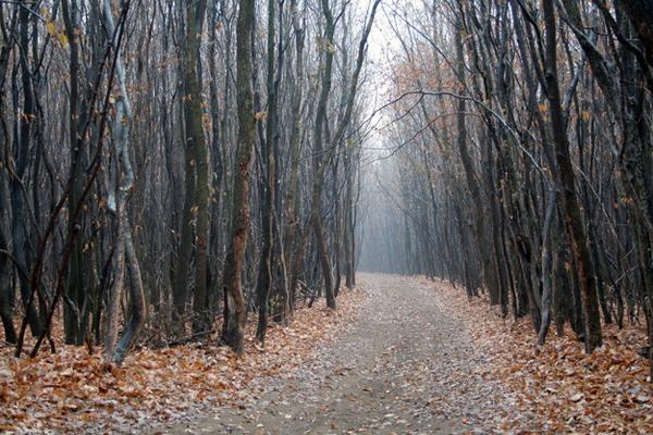 V noci je les opravdu strašidelné místo