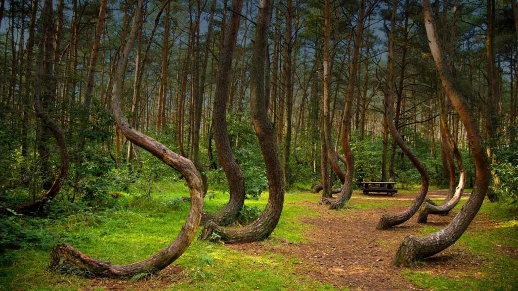 Les za dne nevypadá tak nepřívětivě
