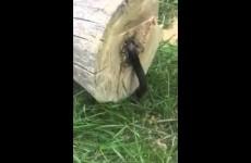 Fuj! Chlapík usekl strom a poté z něj něco začalo vylézat
