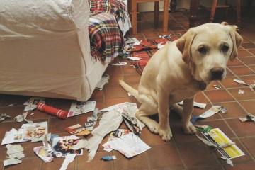 Kompilace provinilých psů