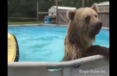 Medvěd v bazénu