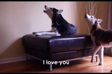 Mishka a Laika – mluvící psi