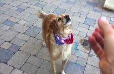 Nejdrsnější kompilace psa Fritze, jak se učí chytat jídlo. Parádní!