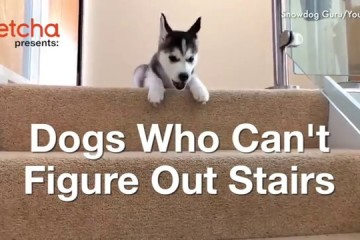 Pes vs. schody