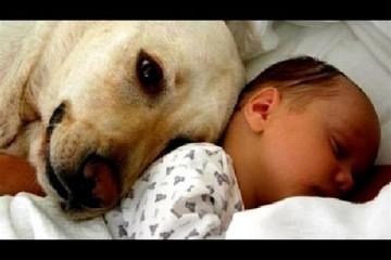 První setkání psů a miminek