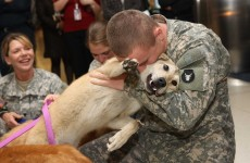 Psi vítají své páníčky – jejich reakce je úžasná