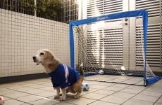 Tento inteligentní pes vám předvede něco neuvěřitelného