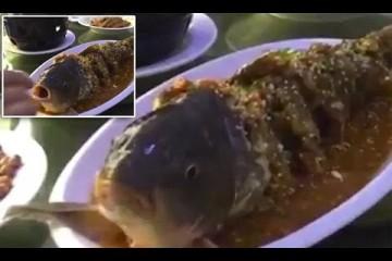 Uvačená ryba na talíři se probere poté, co jí dali panáka alkoholu