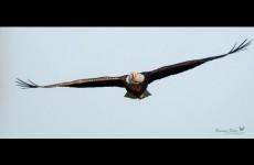 Živý přenos z hnízda amerického orla